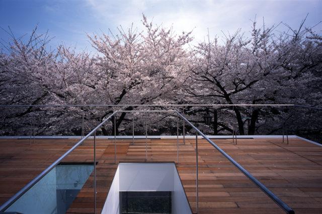 IFLAT桜